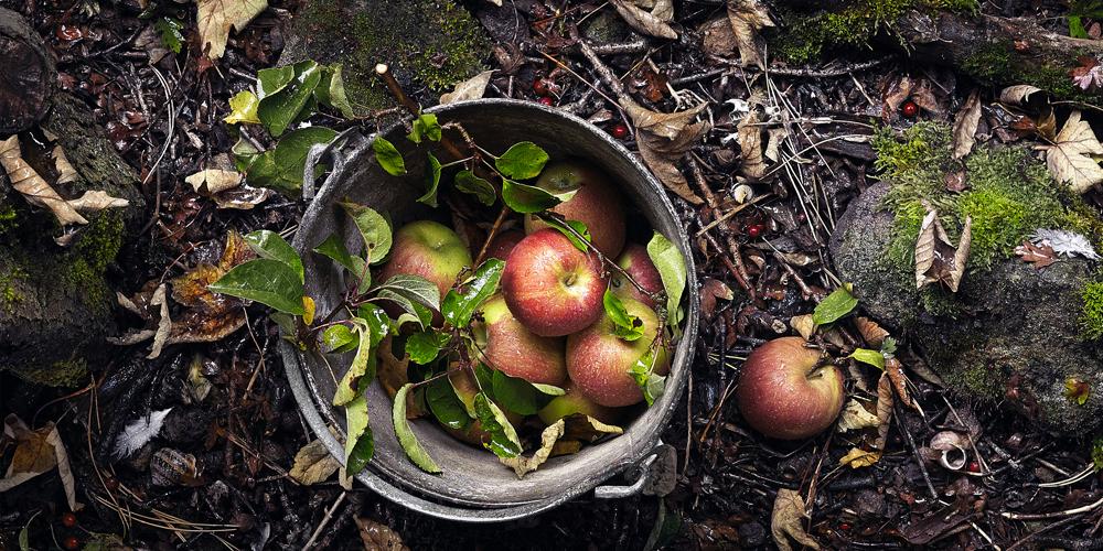 1000x500-apples