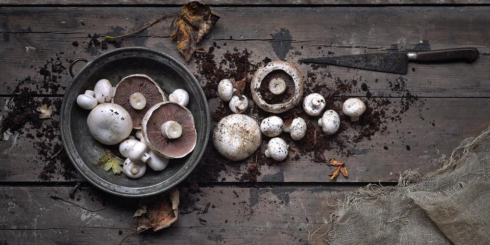 1000x500-mushrooms